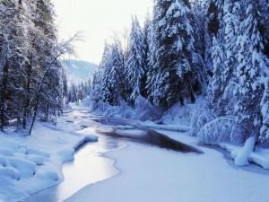 riviere gelee