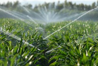 l-irrigation-agricole-avec-les-sondes-capacitives-sentek-ou-les-tensiomètres